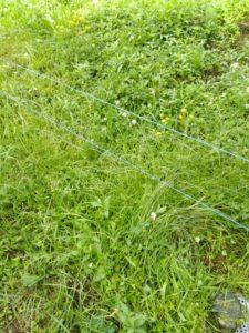すぐに草が電柵に触れてしまうので、こまめに草刈りが必要です